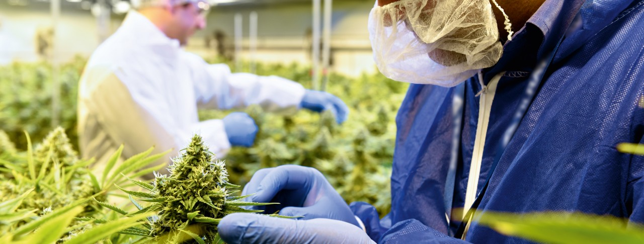 Pioneering treatment options: How medical cannabis improves patients' lives